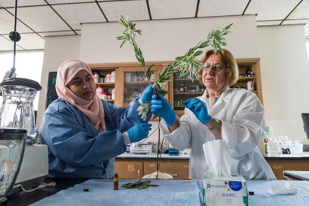 TWU Plant Research